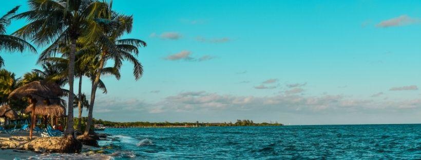 mer turquoise des Caraïbes avec une plage et des palmiers