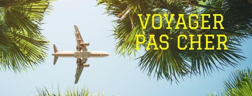 Photo d'un avion qui survole des palmiers avec écrit dans l'un d'entre eux