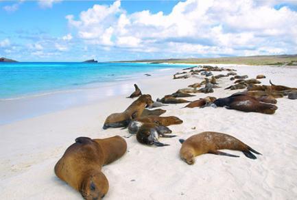 Gardner Bay (île Espanola) - Équateur