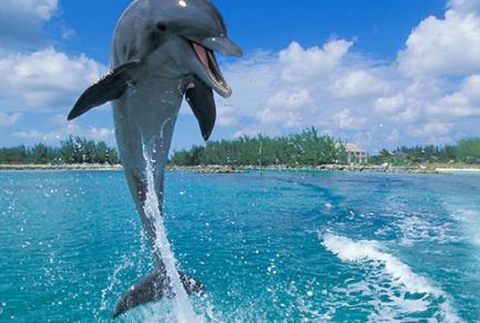 Île de Grand Bahama - Bahamas