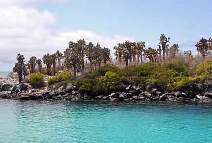L'île de Santa Fe, galapagos - Équateur