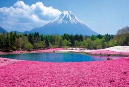 Mt Fuji (Shimizu,Japon) - Japon