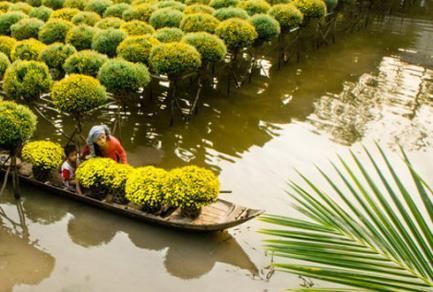 Sa dec - Vietnam