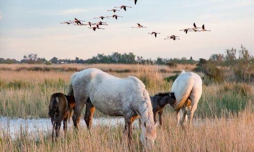 cheveux et oiseaux sauvages dans la nature camarguaise