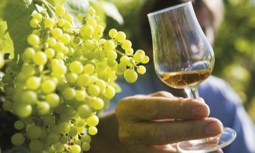 grappe de raisins et verre de cognac tenu par un homme caché par le verre au second plan