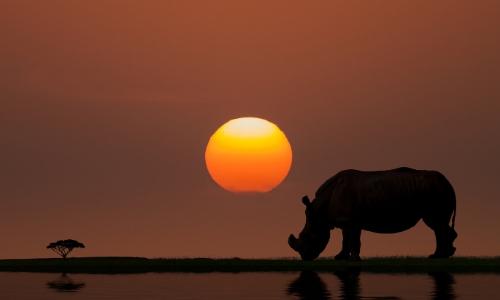 Coucher de soleil sur la Savanne en Afrique