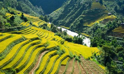 Vue sur les rizières au Vietnam