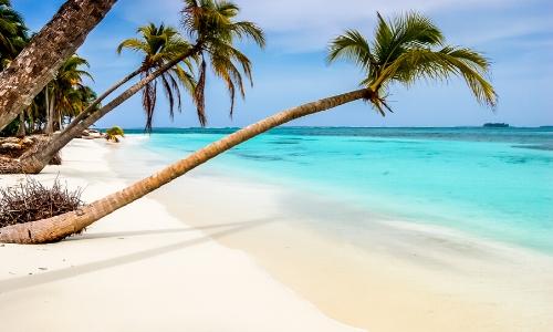 Paysage typique des Caraïbes avec sable blanc et palmiers presque couchés