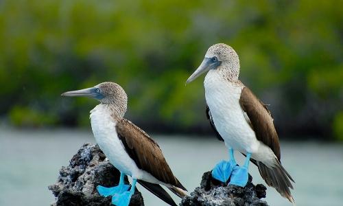 Oiseaux des Îles Galapagos