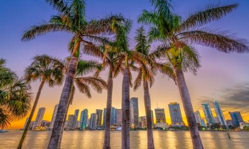 Palmiers, grattes-ciels en arrière-plan