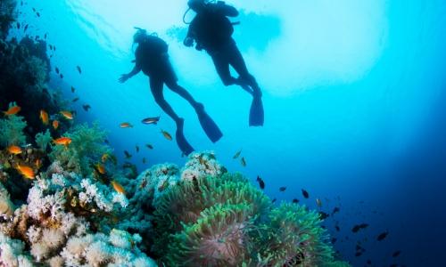 Deux plongeurs au fond de l'océan avec faune et flore diverse