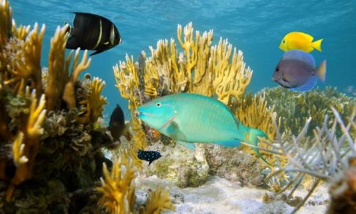 Les fonds marins des Bahamas avec poissons, végétation