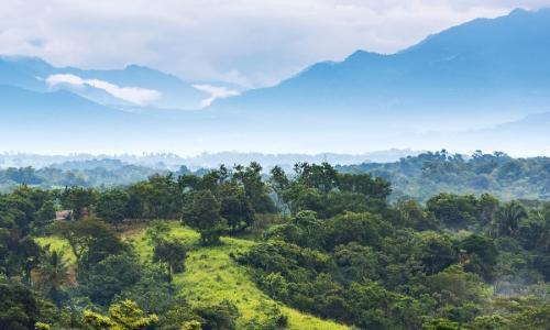 Forêt tropicale au Mexique, arbres à perte de vue
