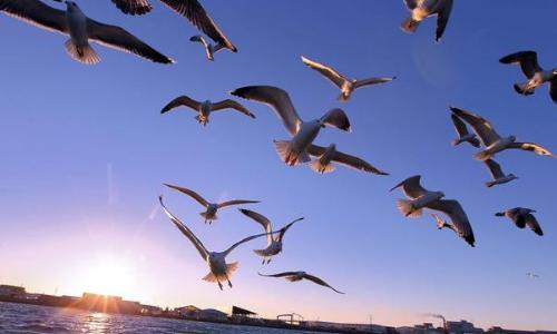 Migration des oiseaux au printemps