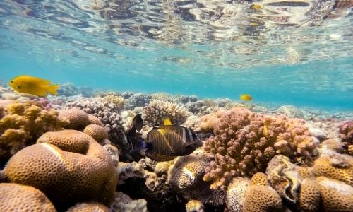 Fonds marins de la mer rouge avec faune et flore