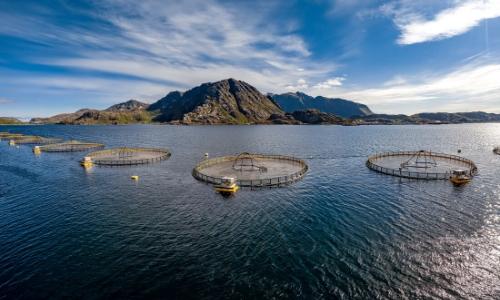 Photo d'une ferme de saumon en Norvège