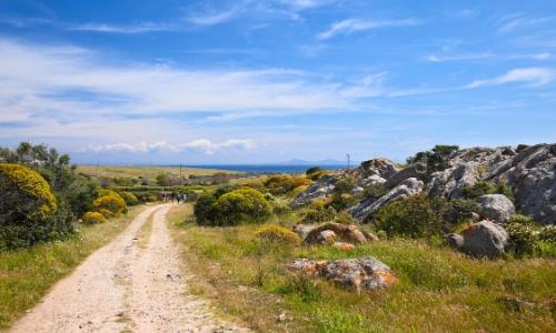 Le Parc Naturel de l'Asinara en Sardaigne avec végétation, rochers