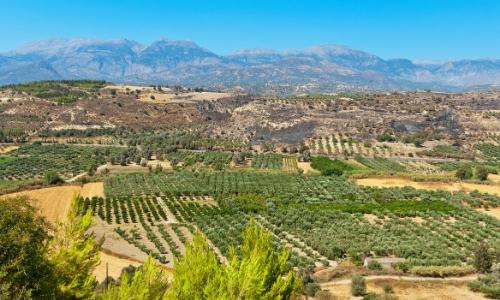 La plaine de la Messara en Crète avec végétation verdoyante sur fond de montagnes