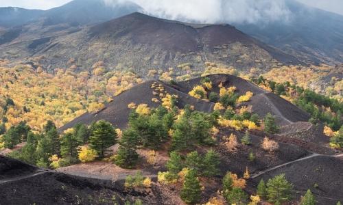 Flore présente sur les flancs de l'Etna