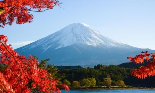 Mont Fuji au loin, enneigé, avec fleurs rouges en premier plan