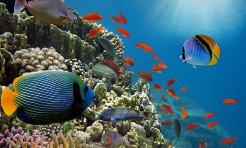 Fonds marins des Caraïbes avec divers poissons de tailles et couleurs différentes