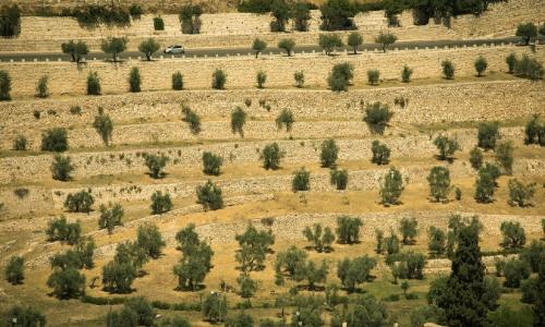 Le mont des oliviers à Jérusalem