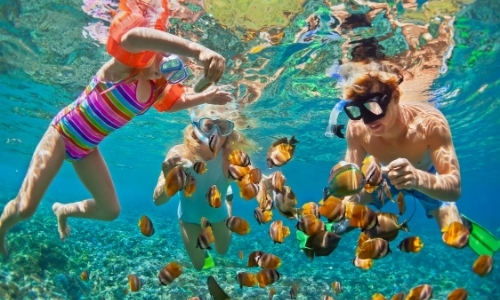 3 personnes avec masques et tubas, espèces sous-marines