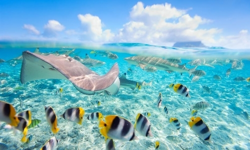 Fonds marins en Polynésie dans eau turquoise avec raies, poissons