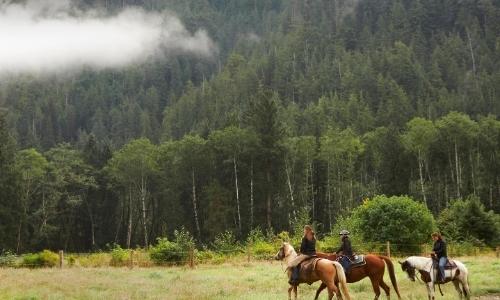 Vue sur un groupe faisant une randonnée à cheval au milieu de la nature