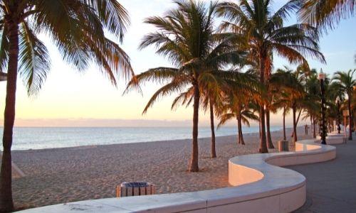 Palmiers de Floride dans l'ombre du coucher du soleil