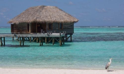 Les pilotis luxueux de l'atoll Rasdhoo