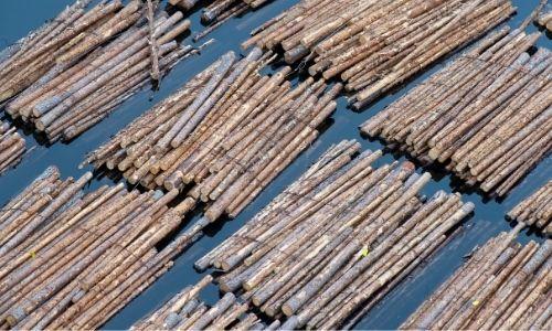 Ballots de bois flottants sur la surface du canal du Nivernais