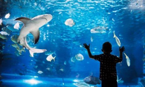 Un enfant devant la vitre d'un aquarium, des requins et poissons nagent
