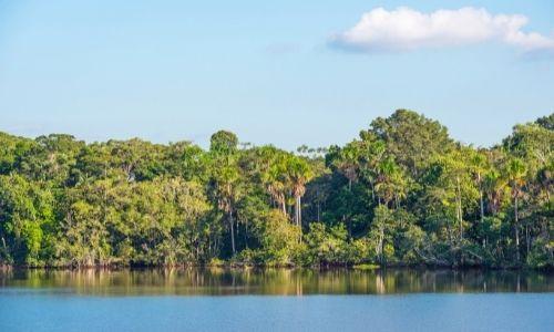 La jungle du parc national Yasuni en Equateur