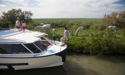 Une famille en bateau sans permis observe les cheveux blanc de Camargue
