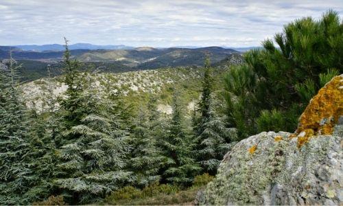Parc régional du Haut Languedoc, ses reliefs et ses pins