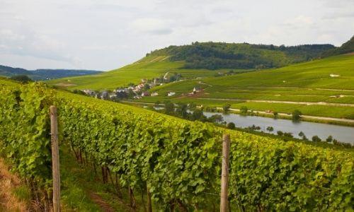 Les vignobles et la campagne d'Alsace